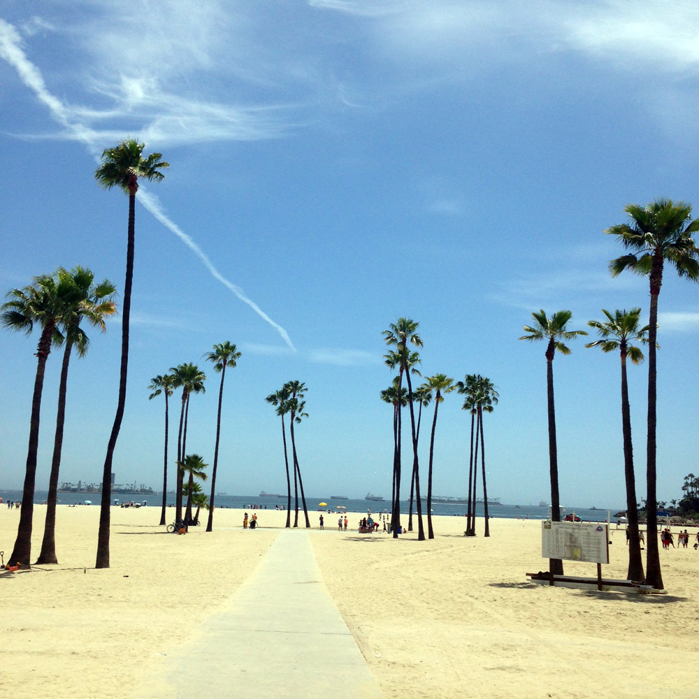 Long Beach Palm Trees Love LA Cali California