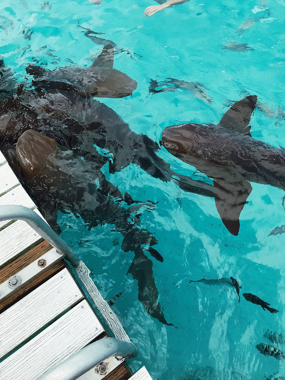 swimming with nurse sharks, The Bahamas, bahamas, island, vacation, trip, travel, birthday, melrodstyle, la blogger, travel blogger, hispanic blogger, mexican blogger, latina blogger, lifestyle blogger, lifestyle